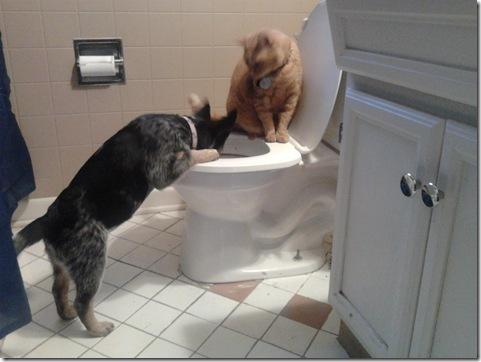 toiletdrinker